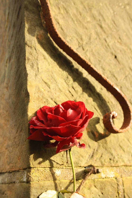 rosa dublin bay