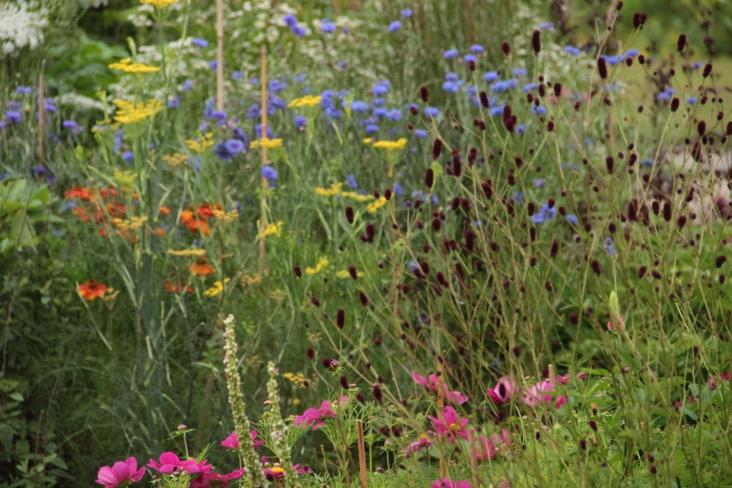 fennal in late summer