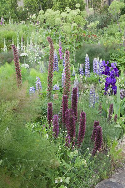 fennal with echium lupin and iris