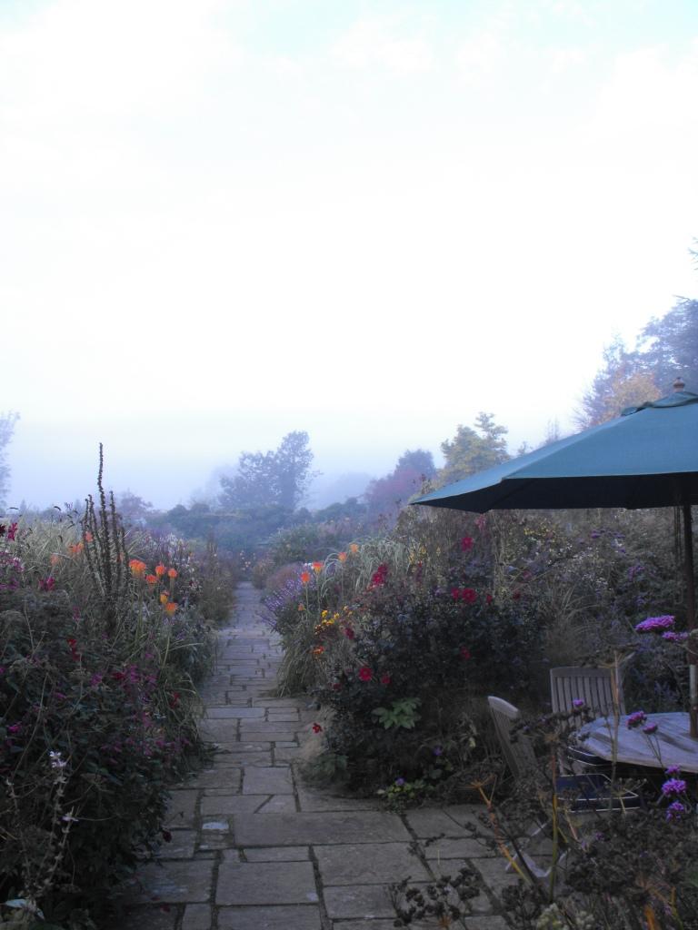 Flower garden fog (2)