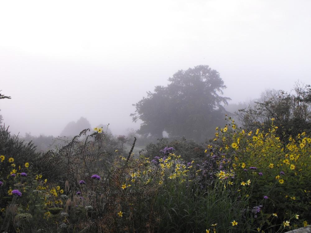 Flower garden fog (4)