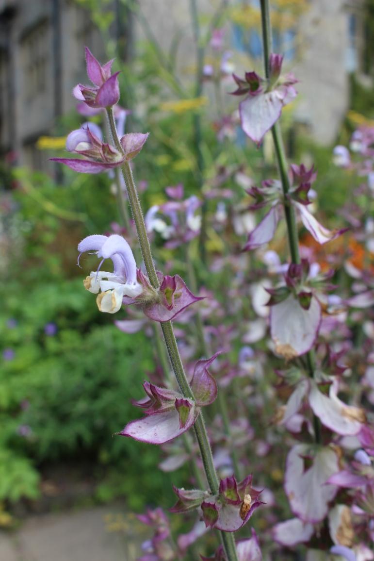 garden blogg 2