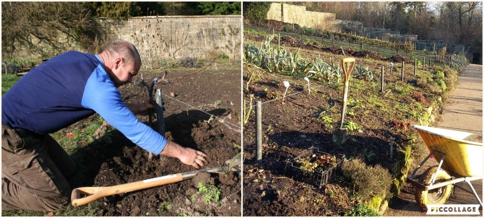hereford-russet-planting