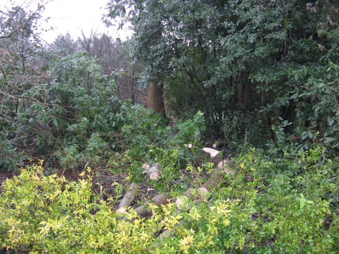 Shrubbery Clearance 2