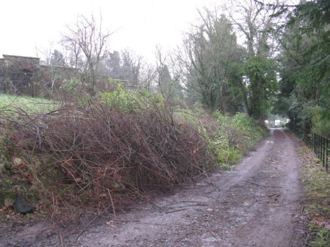 Taming the wild garden 4
