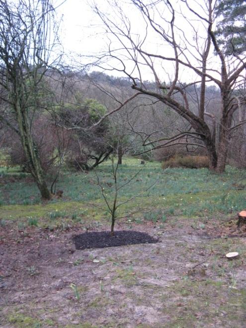 Planting Trees 2