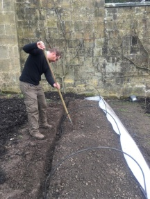 sowing under cloches 2