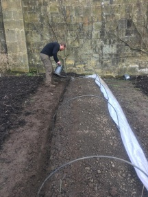 sowing under cloches 3