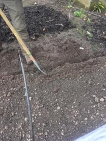 Sowing under closhes
